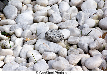 Pebbles in the park.