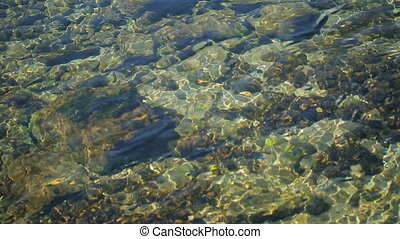 Pebbles lie on lake bottom covered with layer of water