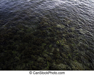Pebbles, rocks, seaweed on the sea floor through clear water in shallow water.