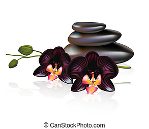 Pebbles with black orchids. Spa composition. Vector ...