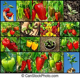 peber, samling