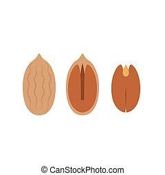 pecan icon, flat design vector