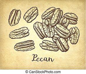 Pecan ink sketch - Handful of pecans. Ink sketch of nuts....