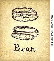 Pecan ink sketch - Pecans. Ink sketch of nuts. Hand drawn...