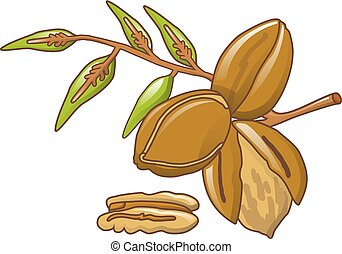Pecan leaves icon, cartoon style - Pecan leaves icon....