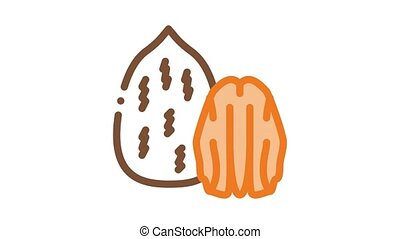 pecan nut Icon Animation. color pecan nut animated icon on white background