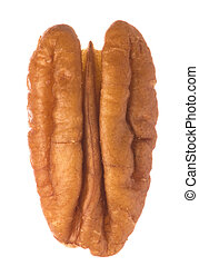 Isolated macro image of a pecan nut.