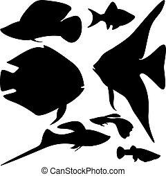 peces, acuario, colección