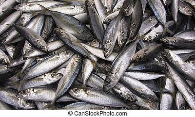 peces, aleta, amarillo