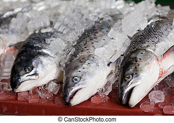 peces, con, hielo, en, tabla
