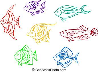 peces, conjunto, acuario, colorido