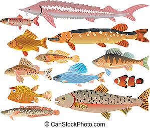 peces, conjunto