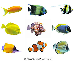 peces, grupo