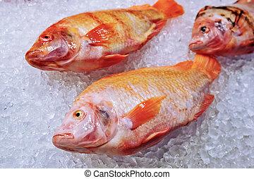 peces marinos, en, hielo
