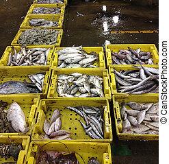 peces marinos, mercado