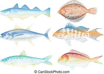 peces, vector, mar