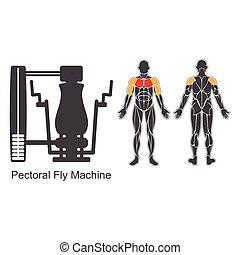 pectoral, mosca, gimnasio, máquina
