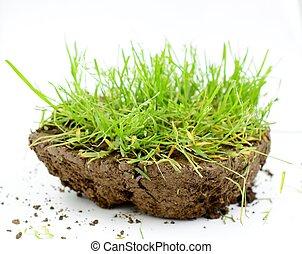 pedaço, de, um, solo, com, grama verde, em, estúdio