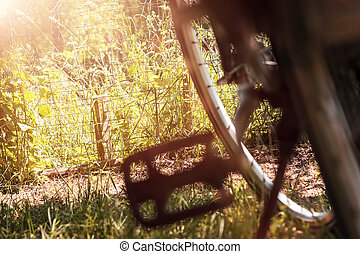 pedal of bicycle in nice nature landscape