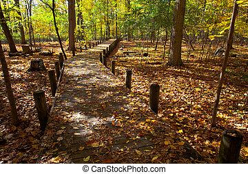 pedestrian 通路, そして, 秋の木