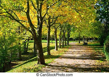 pedestrian 通路, ∥ために∥, 練習, 並ばれる, ∥で∥, 美しい, 秋, 木