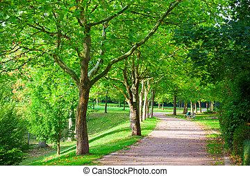 pedestrian 通路, ∥ために∥, 練習, 並ばれる, ∥で∥, 美しい, 高い, 木