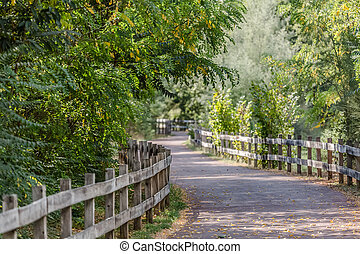 Pedestrian and cycle eco path, asphalt pavement, background and vegetation