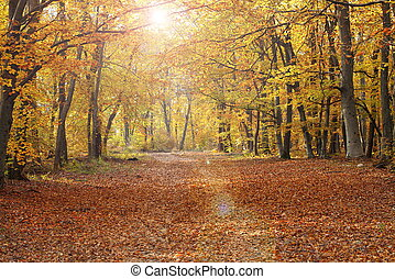 pedestrian path in autumn colorful forest
