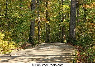 pedestrian path through the forest in fall season