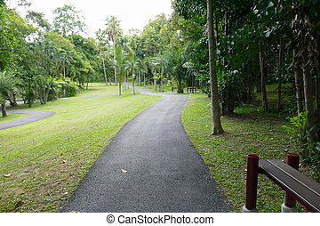 walkway and tree in the park