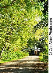 Pedestrian walkway in garden with beautiful trees.