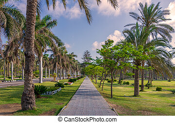 Pedestrian walkway surrounded by trees and palm trees on both sides with partly cloudy sky in a summer day