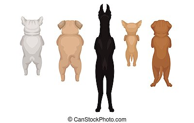Dogs of the breed Doberman, Bulldog, Pug, Chihuahua are standing on their hind legs. Back view. Vector illustration on a white background.