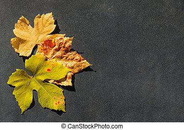 pedra, coloridos, área, folhas, outono, mensagem, quadro