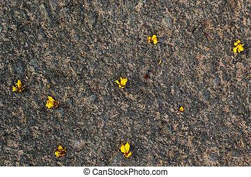 pedra, flores, amarela, floor.