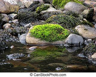 pedra, verde, musgo