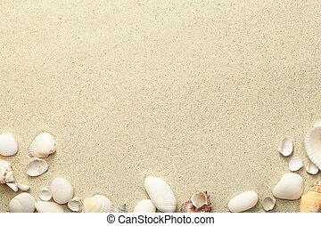 pedras, areia, praia, fundo, conchas