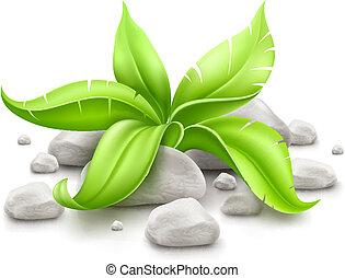 pedras, planta, verde sai
