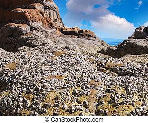 pedras praia, anexado, conchas