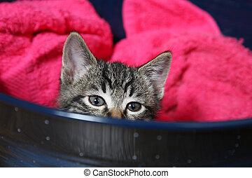 Peek - A curious little tabby kitten peeks over the side of ...