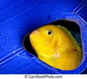 Peekaboo, I See You! - Take a look at this big boy peeking...
