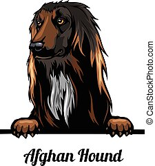Head Afghan Hound - dog breed. Color image of a dogs head isolated on a white background - vector stock