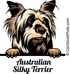 Peeking dog - Australian Silky Terrier - dog breed. Color ...