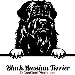 Peeking Dog - Black Russian Terrier breed - head isolated on white