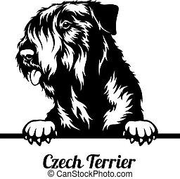 Peeking Dog - Czech Terrier breed - head isolated on white
