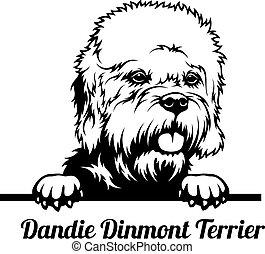 Peeking Dog - Dandie Dinmont Terrier breed - head isolated on white