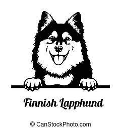 Peeking Dog - Finnish Lapphund breed - head isolated on ...