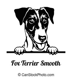 Peeking Dog - Fox Terrier Smooth breed - head isolated on white