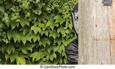 peeking zombie - zombie appearing from around the corner of...