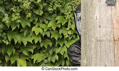 peeking zombie - zombie appearing from around the corner of...